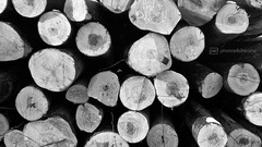 b/w challenge 326 / 365 (photos4dreams) Tags: wood bw white black wooden woods cut sw holz wald schwarz baumstämme weis abgeholzt photos4dreams photos4dreamz p4d