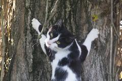 IMG_1519 (fotografia per passione) Tags: cats felini gatti pus