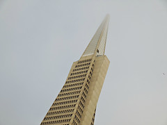 foggy top (kenjet) Tags: sf sanfrancisco city building architecture skyscraper pyramid structure tall transamerica transamericapyramid transamericabuilding williampereira