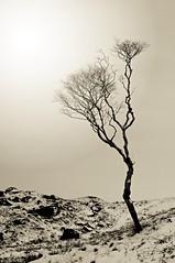 Dovestone. (plot19) Tags: uk trees winter england mountain snow tree english landscape photography one nikon branch northwest britain hill north land british northern dovestone plot19