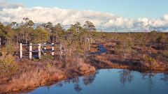 kemeri (Andrey) Tags: november sun cold nature landscape day outdoor walk moor autmn jurmala lettonie kemeri