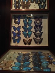 Butterflies (eyair) Tags: uk england london butterfly dulwich hornimanmuseum ashmashashmash