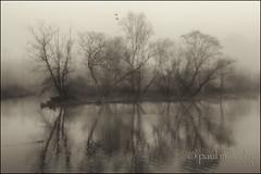 Morning Offering (FiddleFlix) Tags: trees blackandwhite bw usa lake fog sepia geese foggy ducks northcarolina raleigh yatesmillcountypark niksilverefexpro