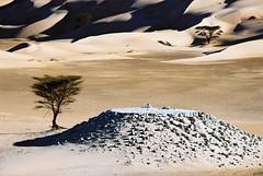 Mauritania (denismartin) Tags: africa light shadow tree sahara weather sand desert dunes afrika mauritania mauritanie الإسلامية canoneos500 chinguetti westernafrica الجمهورية ergouarane denismartin الموريتانية mūrītānyā argenticpic