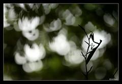 Mantis religiosa étude N°5 (jo.pensel) Tags: mantisreligiosa mantes mante mantereligieuse imagenature insecte insect insectes invertébré bug nature naturebretagne biodiversité capsizun macrophotographie proxyphotographie macro sigma105mmmacro finistère faunedebretagne photographebretagne photobretagne jopensel jocelynpensel jocelynpenselphotographe