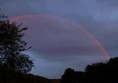 Pink Bow..x (lisa@lethen) Tags: weather evening rainbow pink bow silhouette trees nature