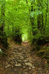 Passo della Futa (Eleonora Sacco | Pain de Route) Tags: via degli dei turismo toscana emilia romagna bologna firenze appennino betulle