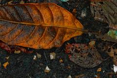 AUTUMN SKETCHBOOK (shmc5hamer) Tags: autumn colour red