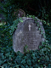 Underground and Overgrown (Steve Taylor (Photography)) Tags: grey green white lowkey stone newzealand nz southisland canterbury christchurch city cbd plant ivy grave gravestome headstone tomb tombstone spooky eerie overgrown cross