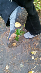 Herbstspaziergang (darksock2004) Tags: socken nassesocken dreckigesocken socks wetsocks dirtysocks spaziergang herbst herbstspaziergang autumn ichmagdenherbst