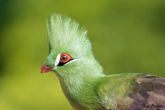 (JOAO DE BARROS) Tags: animal bird zoo joo barros portrait