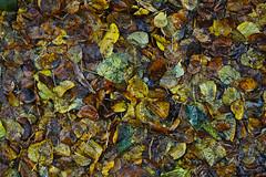Automne (Elsephir) Tags: automne autumn leaves feuilles couleurs colors