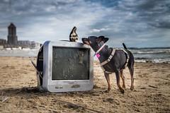 hi, madonna! (DanMasa) Tags: madonna statuina cane pinscher dog spiaggia beach mare televisore tv schermo abandoned nettuno