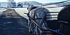 Frostkutsche (christian.riede) Tags: leika kutsche chariot reif kalt