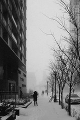 Battling The Snow 2 (Duncan Rawlinson - Duncan.co - @thelastminute) Tags: 150danleckieway 150danleckiewaytorontoonm5v0e3 150danleckiewaytorontoontario 18vza3a55qfz1gtpppfrioi2nht3xlzfje 5dmkiii architecture bw battlingthesnow battlingthesnow2 canada canon canoneos5dmark3 canoneos5dmarkiii city danleckieway downtowntoronto duncanrawlinsonphotography frost frosty ontario photobyduncanrawlinson snow snowpocalypse snowy storm stormy takenwithcanoneos5dmarkiii toronto torontoontariocanada urban weather winter bandw blackandwhite blizzard canadaweather climate cold freeze httpduncanco httpduncancobattlingthesnow2 httpsblockchaininfotxf105d8331d6ab3351fa181392ea9be76494da5971792b3b73227fea278543f01 meteorology outdoor pattern sky snowstorm snowfall snowflake snowing street trees umbrella weatherincanada white