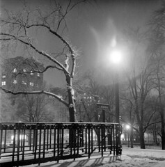 020459 01 (ndpa / s. lundeen, archivist) Tags: nick dewolf nickdewolf blackwhite photographbynickdewolf tlr bw 1959 1950s february winter boston massachusetts beaconhill night nighttime wintersnight park common bostoncommon tree branches snow snowy snowfall trees film 6x6 mediumformat monochrome blackandwhite light lights railing ironwork building restroom sign ladies ladiesrestroom womensrestroom