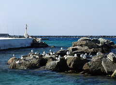 Tinos port (IM_Kakoulidi) Tags: tinos greece island holiday    summer seagulls