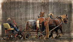 Three Horse Power (thepoocher7) Tags: mennonites mennoniteman jerryrig oldcarseat field plow whip horses teamofhorses oldfashioned strawhat sunglasses hawesville ontario rural countryside farm farmwork horsepower canada fall barnboard