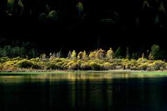 Sobrarbe en otoño. En el embalse de Pineta (ver grande) (carnuzo) Tags: leica m9 elmarit 135mm
