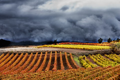 Autumn Colors (pasotraspaso. Jesus Solana Fine Art Photography) Tags: vineyards viedos outdoor colors autumn rojo red yellow amarillo ocres verde green clouds nubes tormenta storm