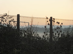 Misty sunrise and damp hedgerow.... must be December.... (Sue - happy sparrow) Tags: hedgerow fence mist goalpost goal portland dorset playingfield teasels bramble wet weather