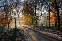 Dyrehaven (Ulrich J) Tags: dyrehaven trer danmark efterr modlys landskab skov autumn backlight denmark fall forest landscape trees wood