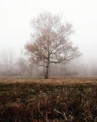 Tree (mariazaharievaPH) Tags: instagramapp square squareformat iphoneography juno park sofia bulgaria