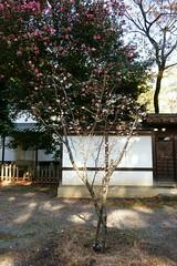 DSC02843 (MrSUIZOU) Tags: 京都 紅葉 北野天満宮 平野神社 十月桜
