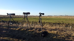 A Day In The Field With Friends (aaron19882010) Tags: tripods outside outdoors nature canon lens fields grass green brown wildlife hunting waiting straps clouds blue sky trees