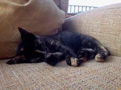 Visa the kitten (AlanJ97) Tags: sleeping summer cat kitten meow visa lahinch surfcity lehinch