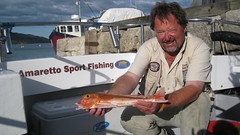 "Steve Sweet's Red Gurnard • <a style=""font-size:0.8em;"" href=""http://www.flickr.com/photos/113772263@N05/20712045555/"" target=""_blank"">View on Flickr</a>"