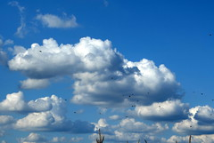 FlyingLessons (Zandgaby) Tags: blue sky white birds clouds grey fly flying corn wide spacious lesson