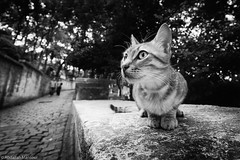 (Abdallah A. Mansour) Tags: blackandwhite bw cats monochrome animal animals cat turkey geotagged outdoor places istanbul stray tr presets silverefexpro2