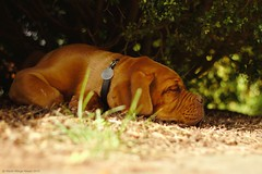 Rumble in the jungle (Martin Werge Nissen) Tags: fall animal dof natur maximus canon50mm18 doguedebordeaux