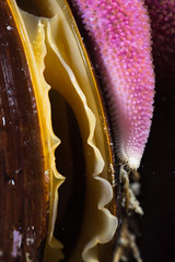 Blir til abstakt kunst (Linn Rkenes) Tags: 10 dykking sjstjerne skjell undervannsbilder altafjord oskjell kfjord subsee gulsolstjerne