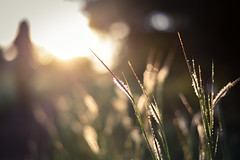 Kas Plateau : The Dancing Girl (anish.padalkar) Tags: india plant field grass landscape bokeh outdoor maharashtra serene depth satara kas weekendgetaway traveldiaries anishpadalkar