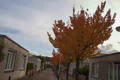 Floriade_251015_5 (Bellcaunion) Tags: park autumn fall nature zoetermeer rokkeveen florapark