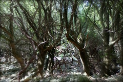 The aMAZEing Randi forest. Thanks for all the red dots! (Kalsjon) Tags: forest hiking ikaria september greece maze randi holmoak