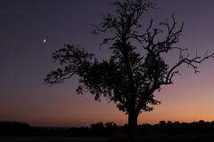 Les couleurs du crépuscule **---+°-° (Titole) Tags: tree dusk sky titole nicolefaton silhouette friendlychallenges 15challengeswinner challengeyouwinner cyunanimous