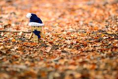 Upon a carpet of leaves (ciccioetneo) Tags: autumnleaves shallowdepthoffield shallowdof danbo amazoncojp carpetofleaves nikkor80200mm nikkor80200mmf28 nikkor80200mmf28ed danboard leavescarpet revoltechdanboard nikond3100 ciccioetneo etnadanbo