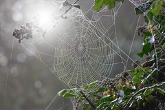 Spider's web - Explored :) (ian._harris) Tags: digital
