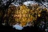 2015-11-01_Q8B3958 © Sylvain Collet.jpg (sylvain.collet) Tags: autumn france nature automne sur marne vairessurmarne vaires