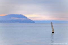 Pyramid Point ... gull watch (Ken Scott) Tags: november autumn sunset usa fall michigan seagull lakemichigan greatlakes piling hdr freshwater voted leelanau pyramidpoint 2015 goodharborbay 45thparallel sbdnl sleepingbeardunenationallakeshore mostbeautifulplaceinamerica