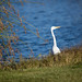 Stork by the lake