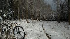 Heuberg vorm Schneefall (twinni) Tags: salzburg bike austria sterreich al canyon sl 99 mtb biketour spectral heuberg flachgau mw1504 28112015