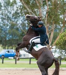 151204_Clarendon_5.2_2730.jpg (FranzVenhaus) Tags: horses sydney australia riding newsouthwales athletes aus equestrian supporters riders officials dressage spectatorsvolunteers