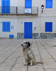 Marettimo, Egadi Islands, Sicily, October 2015 584 (tango-) Tags: italien italy italia italie sicilia egadi sizilien sicilie marettimo sicilyoctober2015