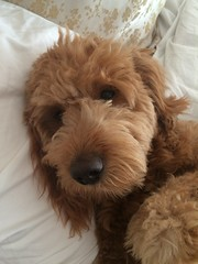 what-an-adorable-boy--gus-at-nine-months--he-is-maggies-boy_21542818402_o