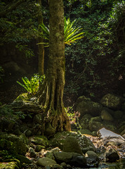 "Rain Forest Minamurra Falls • <a style=""font-size:0.8em;"" href=""http://www.flickr.com/photos/7605906@N04/23741703441/"" target=""_blank"">View on Flickr</a>"