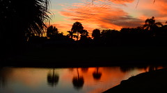 Bradenton's Sunset (Jim Mullhaupt) Tags: pictures camera pink blue sunset red wallpaper sky orange sun lake color reflection tree water weather silhouette yellow clouds landscape photography gold evening photo pond nikon flickr sundown florida dusk snapshot picture palm exotic p900 tropical coolpix bradenton endofday cloudsstormssunsetssunrises nikoncoolpixp900 coolpixp900 nikonp900 jimmullhaupt